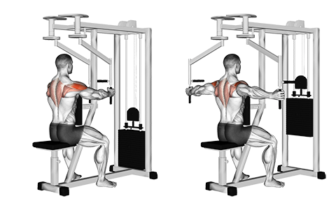 Seated Reverse Fly - Vertical Handles