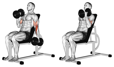 Seated Alternate Incline Dumbbell Biceps Hammer Curl