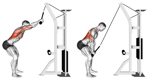 Standing Cable Rope Lat Pushdown