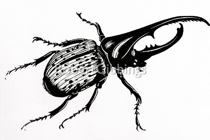 RG beetle etc.jpg