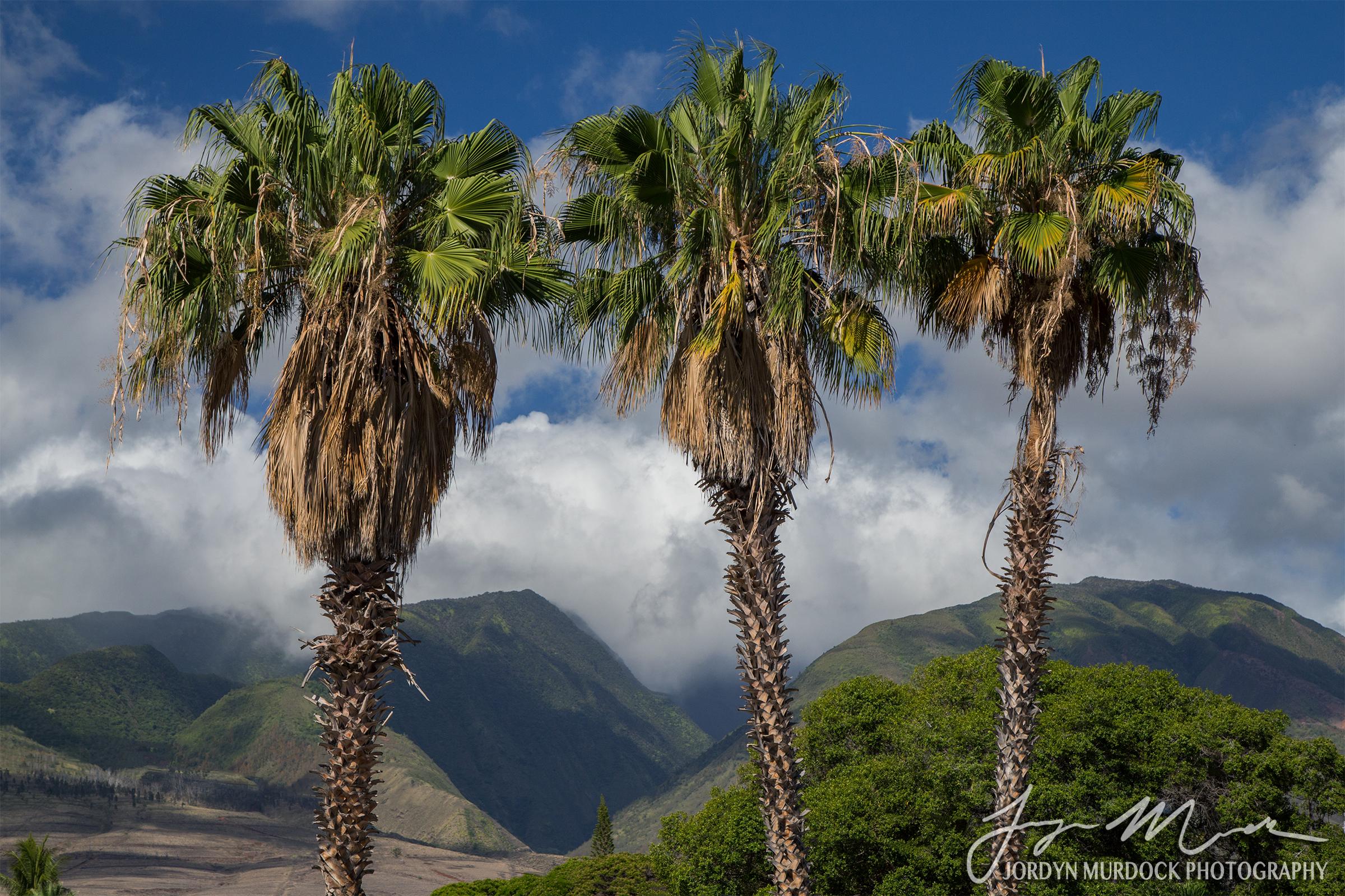 Palms Web WM.jpg