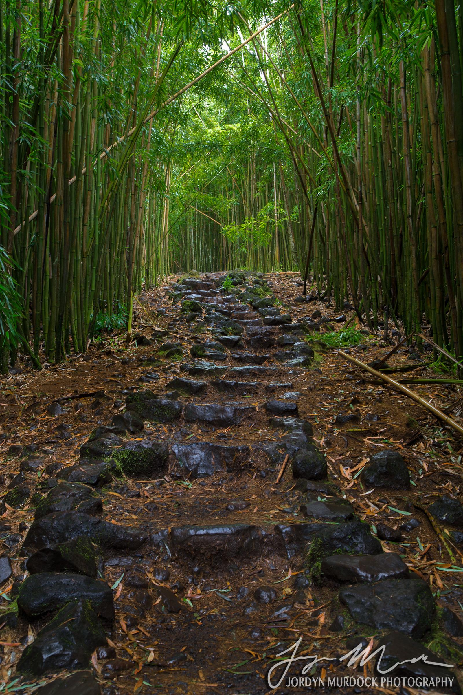 Pipiwai Trail Web WM.jpg