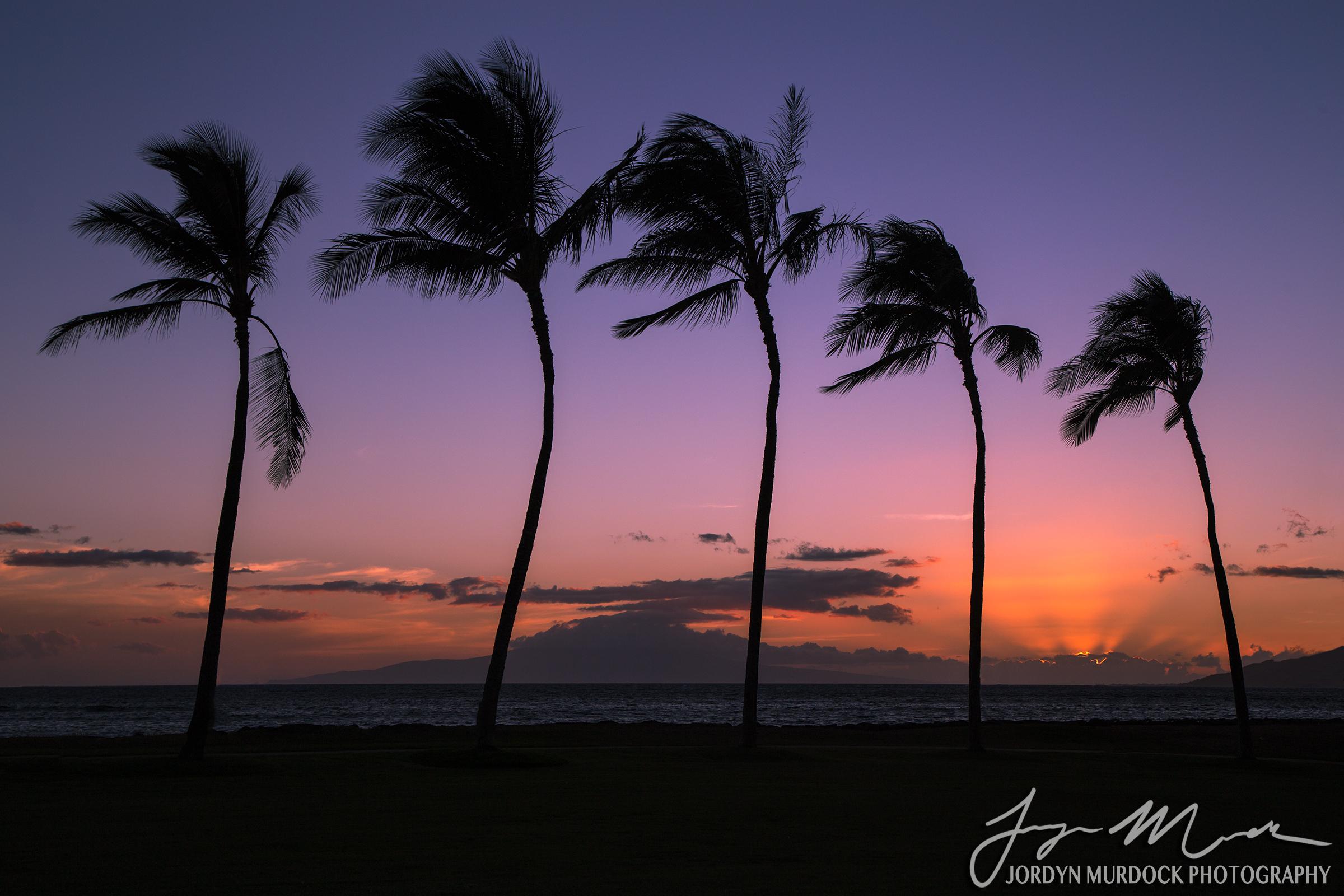 Sunset Web WM.jpg