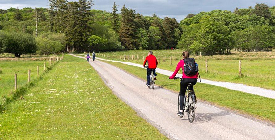 killarney-bike-tour-killarney-national-forest-900x460.jpg