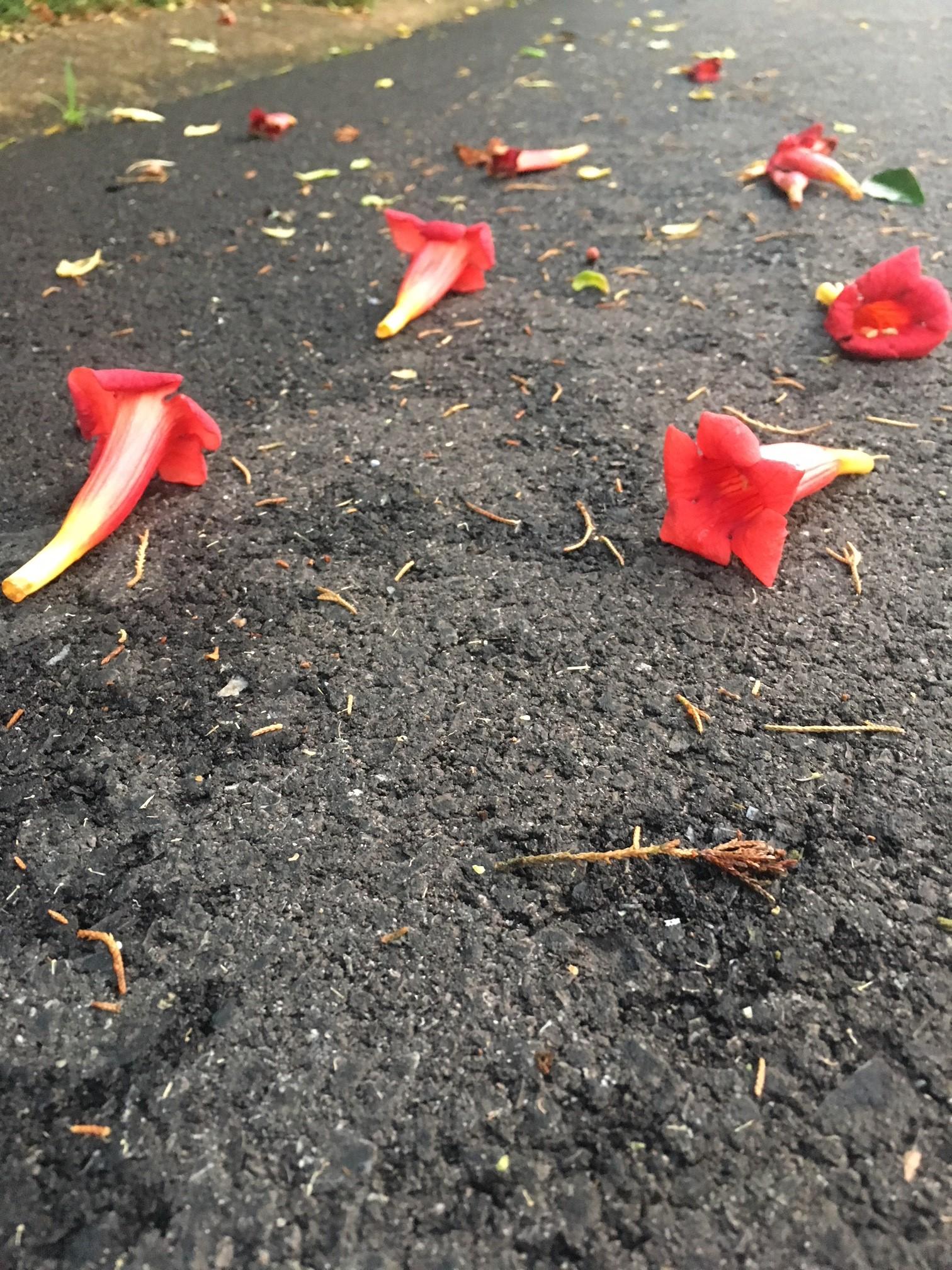 flowers road.jpg