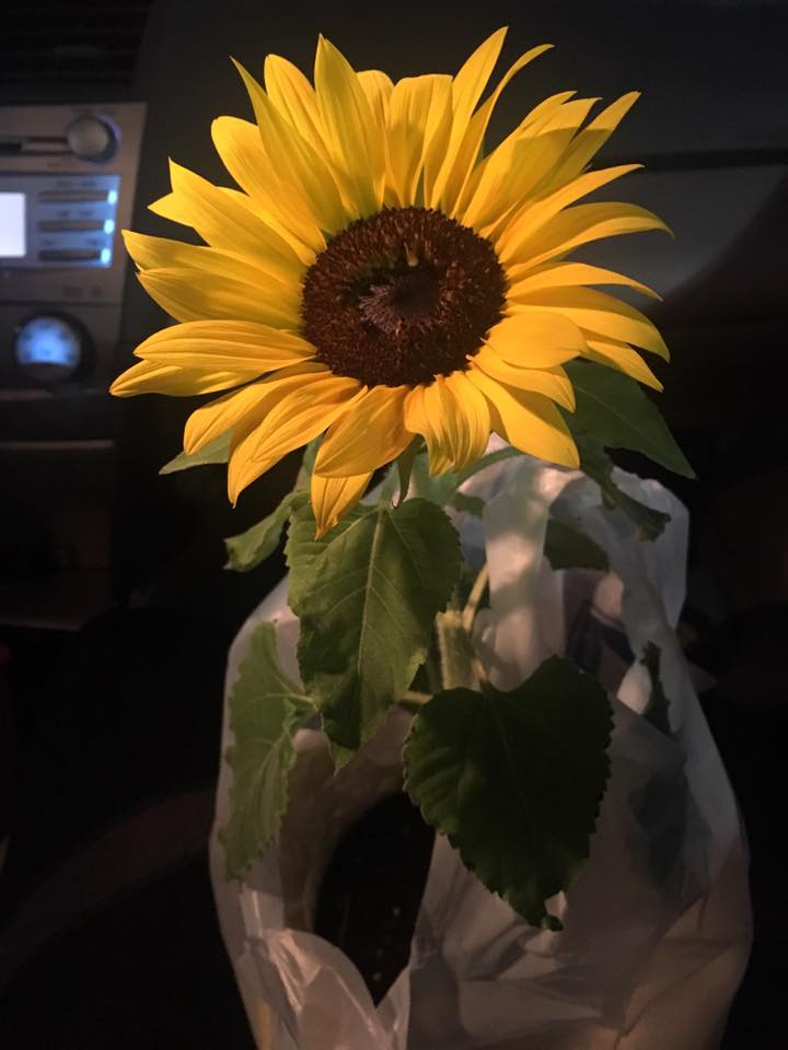 Sunflower in car.jpg