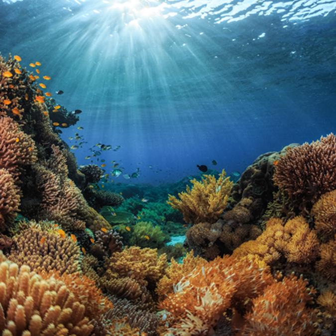 Conserve Oceans square.png