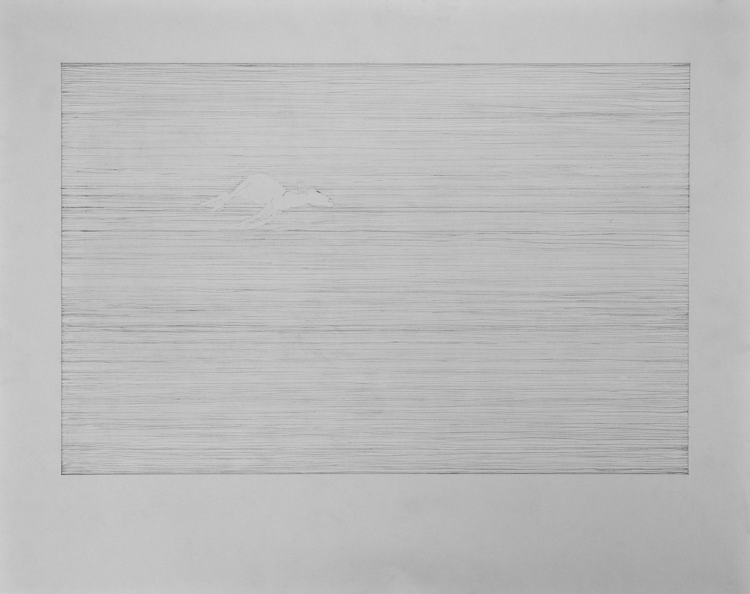 Graphite on paper  2011,61x48cm