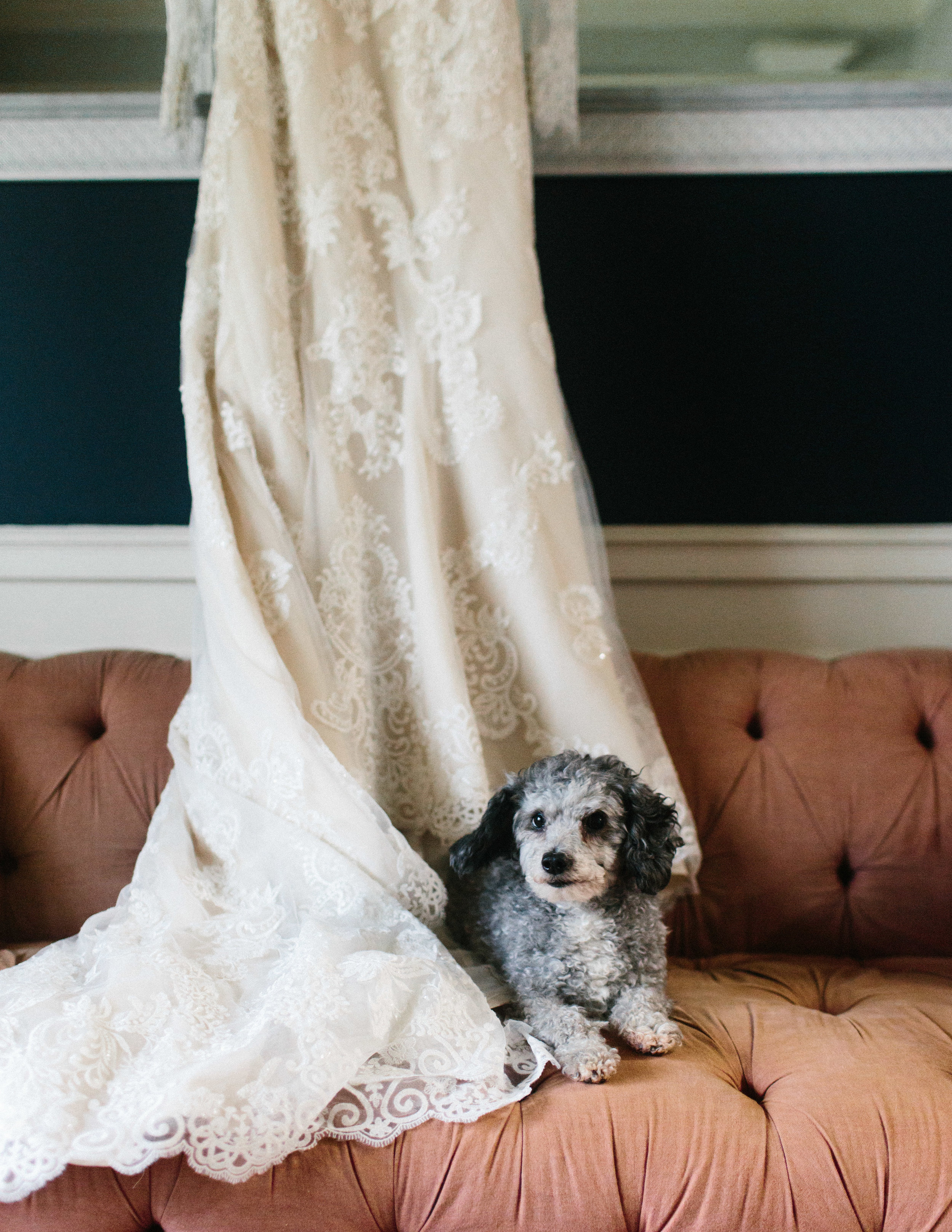 newnan_georgia_elegant_rainy_park_elopement_dogs_pups_tiny_wedding_backless_dress_blue_suit_georgia_atlanta_photographer_1013.jpg