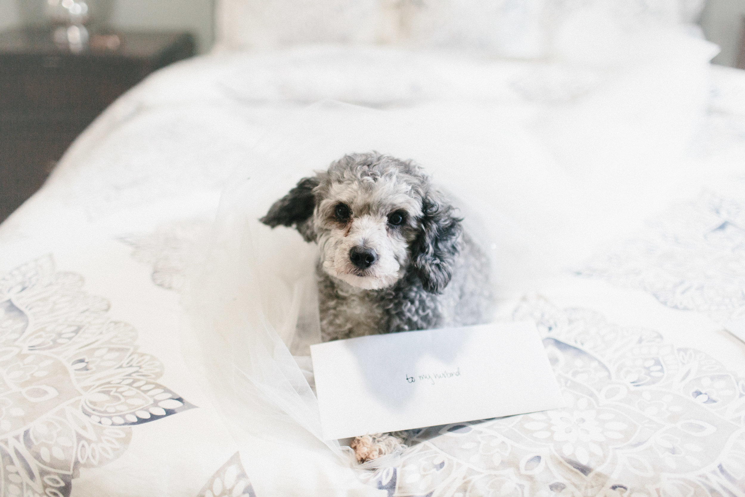 newnan_georgia_elegant_rainy_park_elopement_dogs_pups_tiny_wedding_backless_dress_blue_suit_georgia_atlanta_photographer_1020.jpg