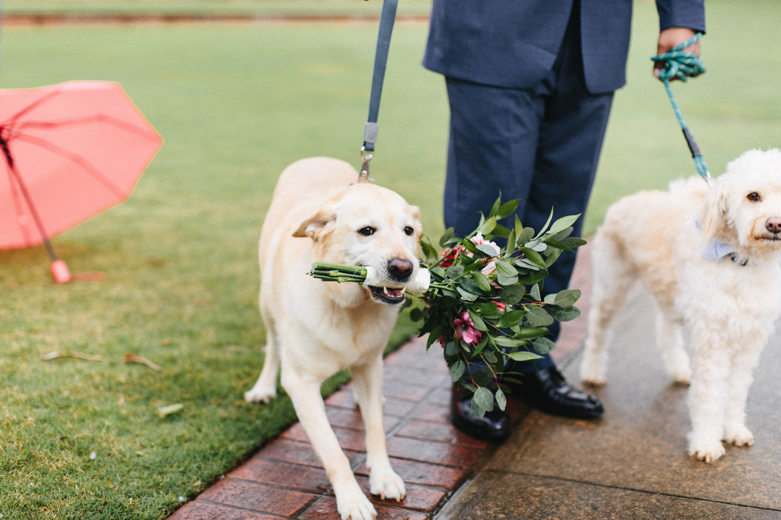 newnan_georgia_elegant_rainy_park_elopement_dogs_pups_tiny_wedding_backless_dress_blue_suit_georgia_atlanta_photographer_1292.jpg