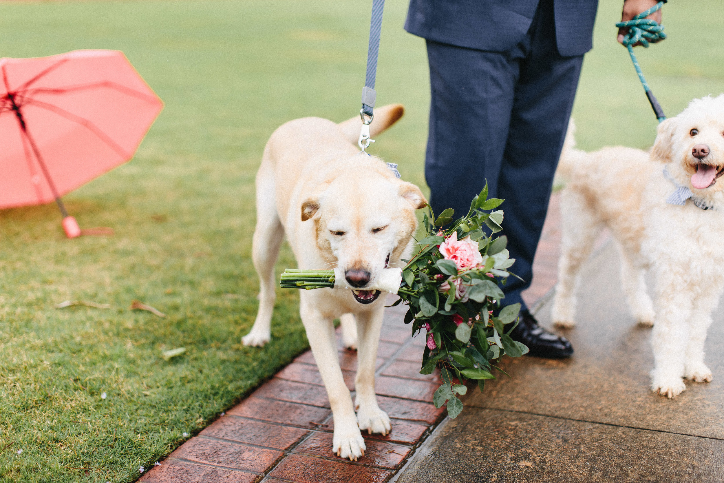 newnan_georgia_elegant_rainy_park_elopement_dogs_pups_tiny_wedding_backless_dress_blue_suit_georgia_atlanta_photographer_1293.jpg