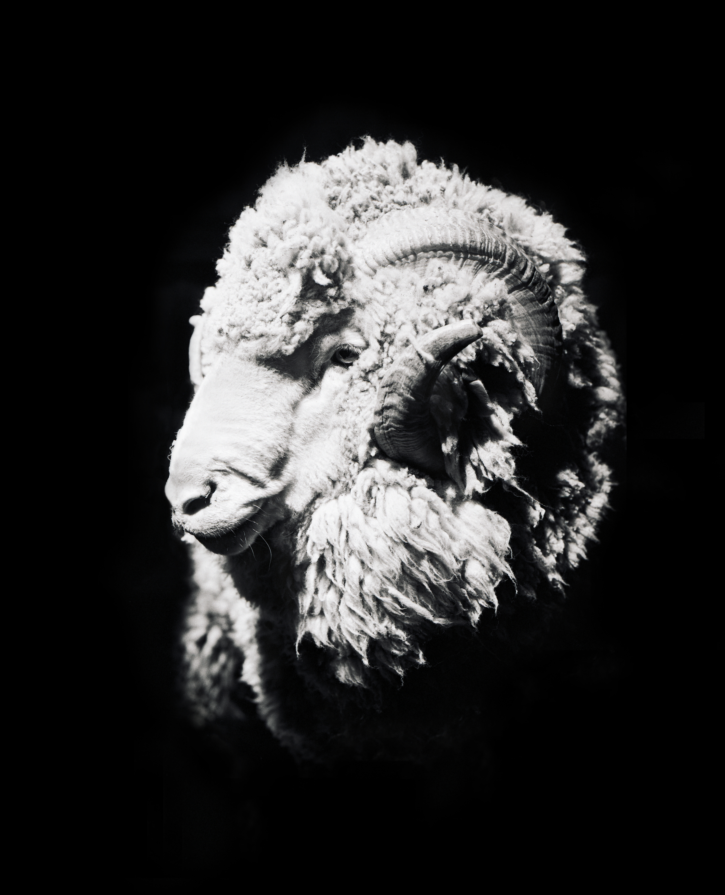 20030901-MB-sheepshear-007-copy.jpg