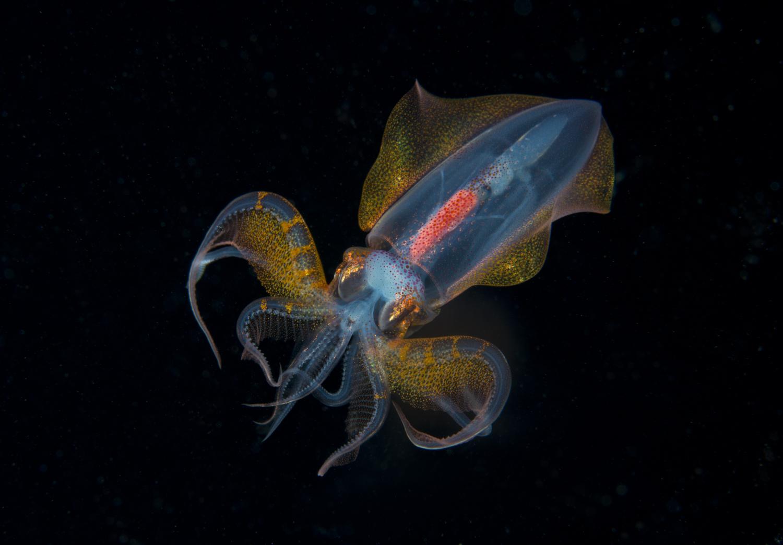 Unknown Squid Defense Mode.jpg