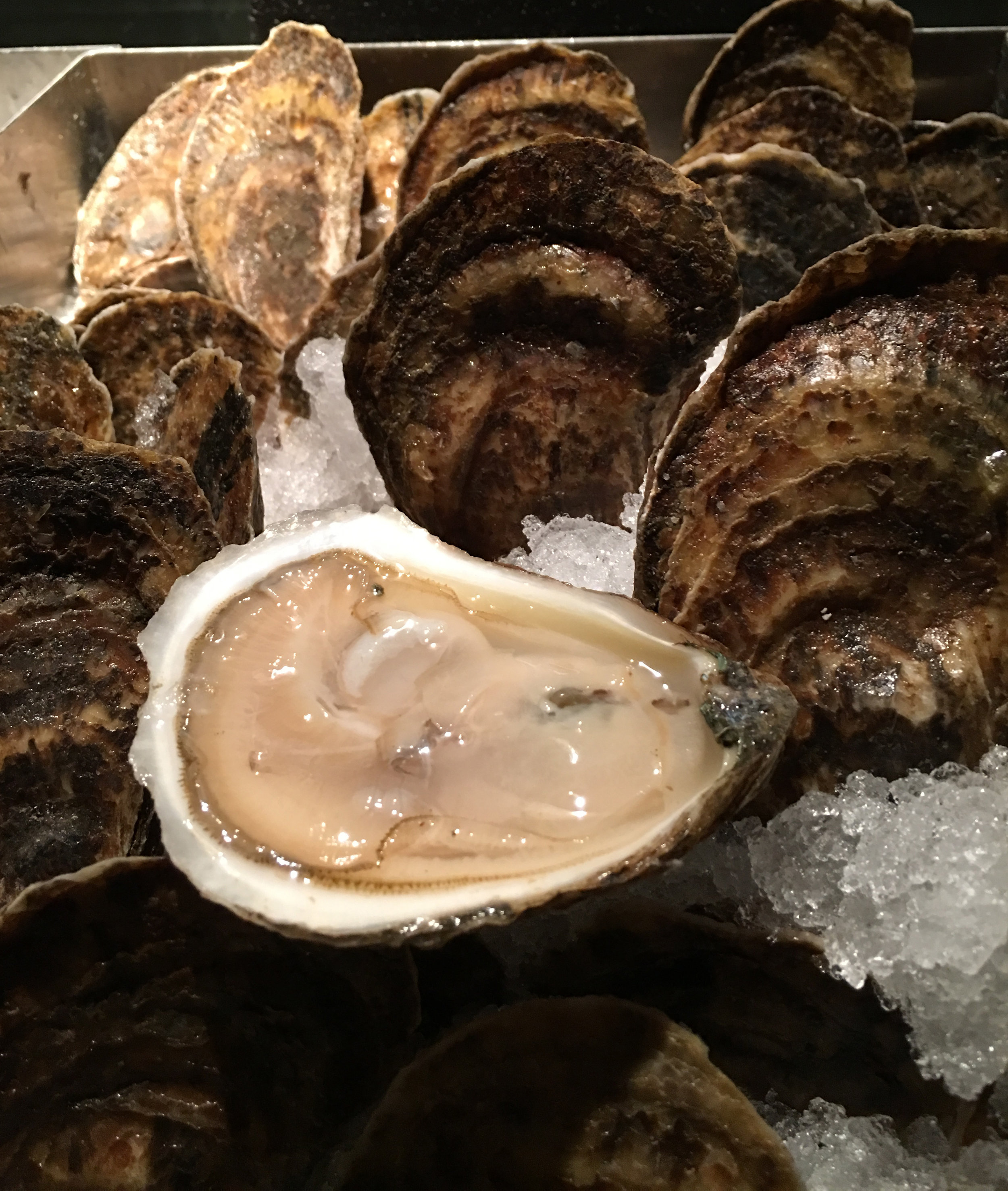 Pemaquid Oysters from Maine - absolutely delicious