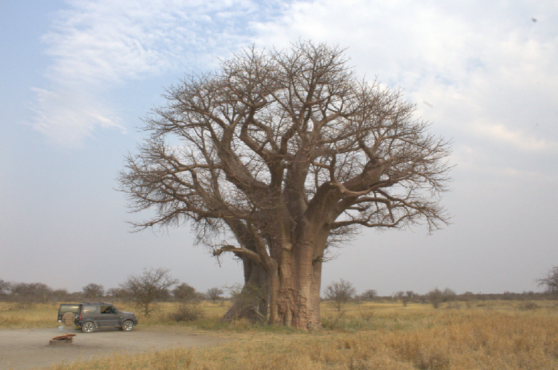 Jolene under the baobab at campsite 3