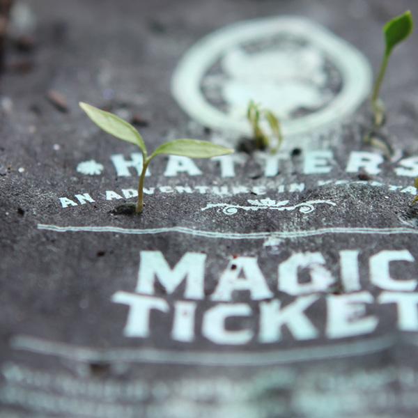 magic-tickets-grow_600.jpg
