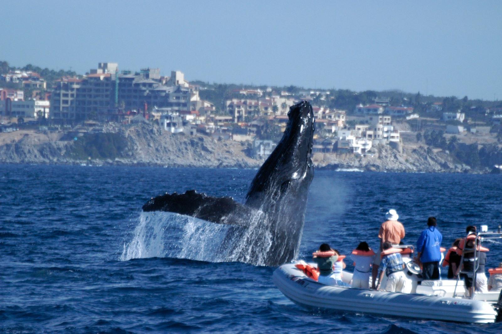 WhaleWatch_08.JPG