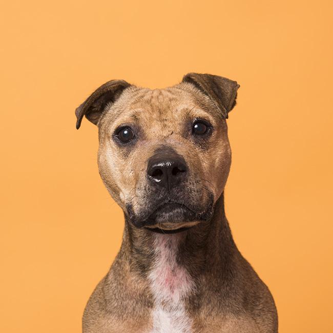 Dingo - Adopted