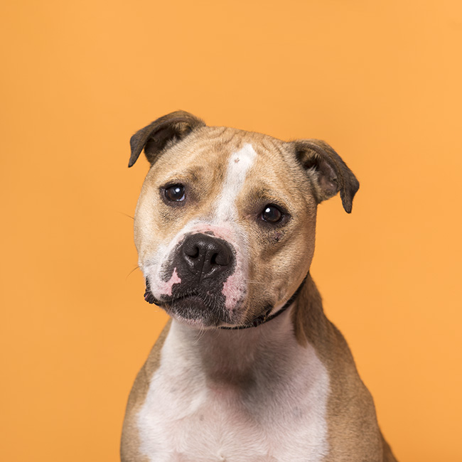 Gretel - Available