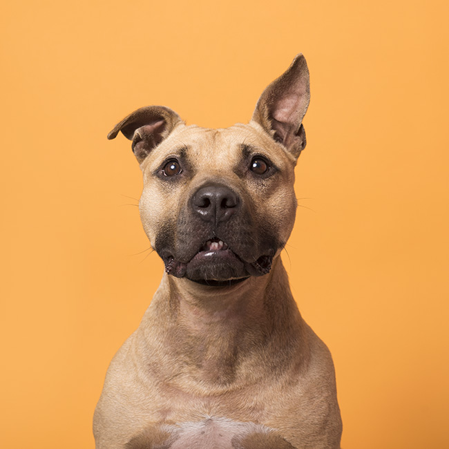 Jack - Available