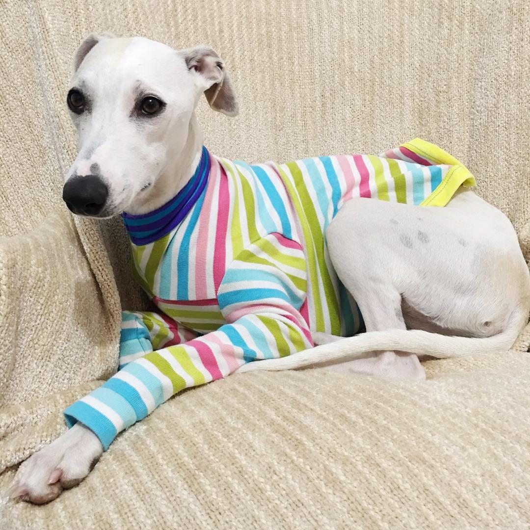 pip rainbow sweater.jpg