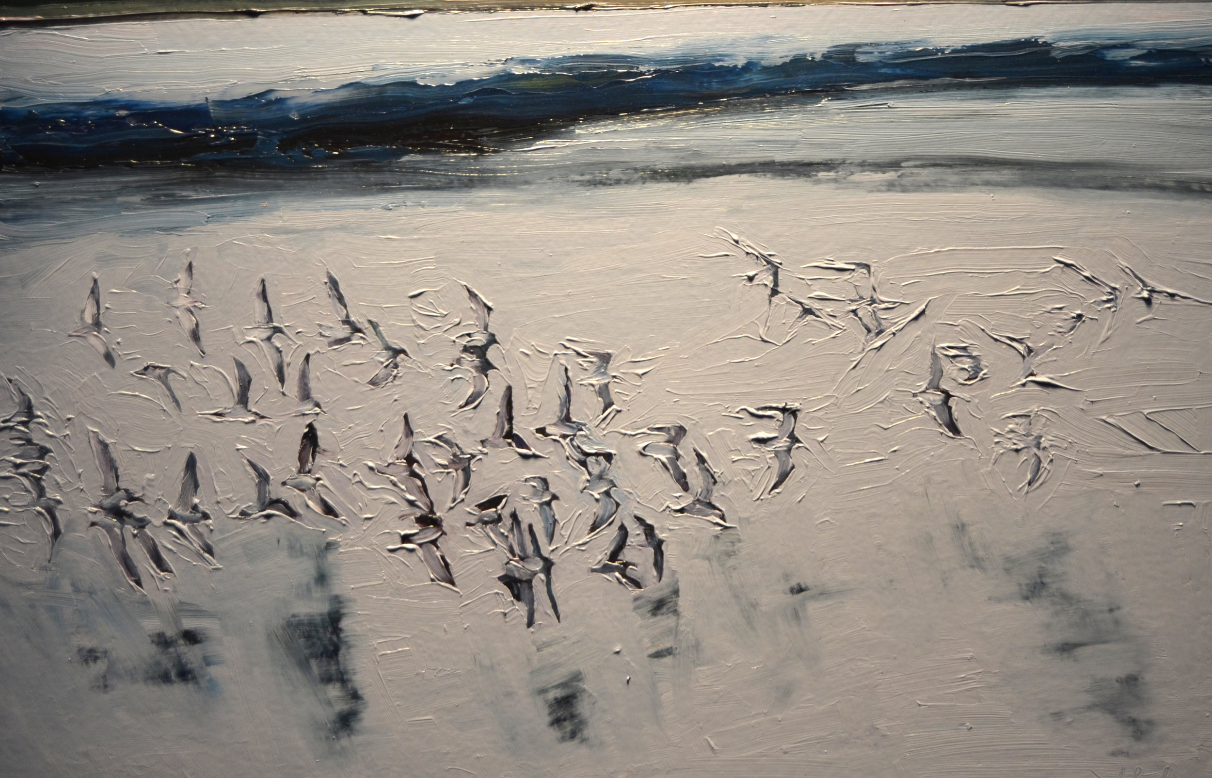 Birds, Shore From Here