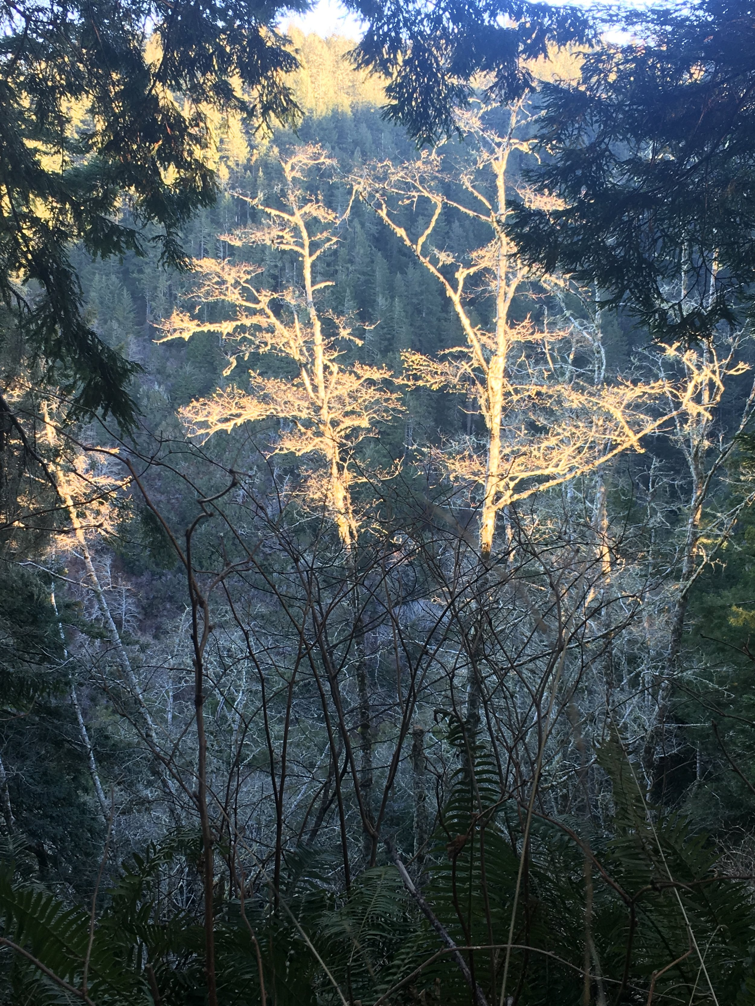 sunrise hits the ravine below Last Chance trail