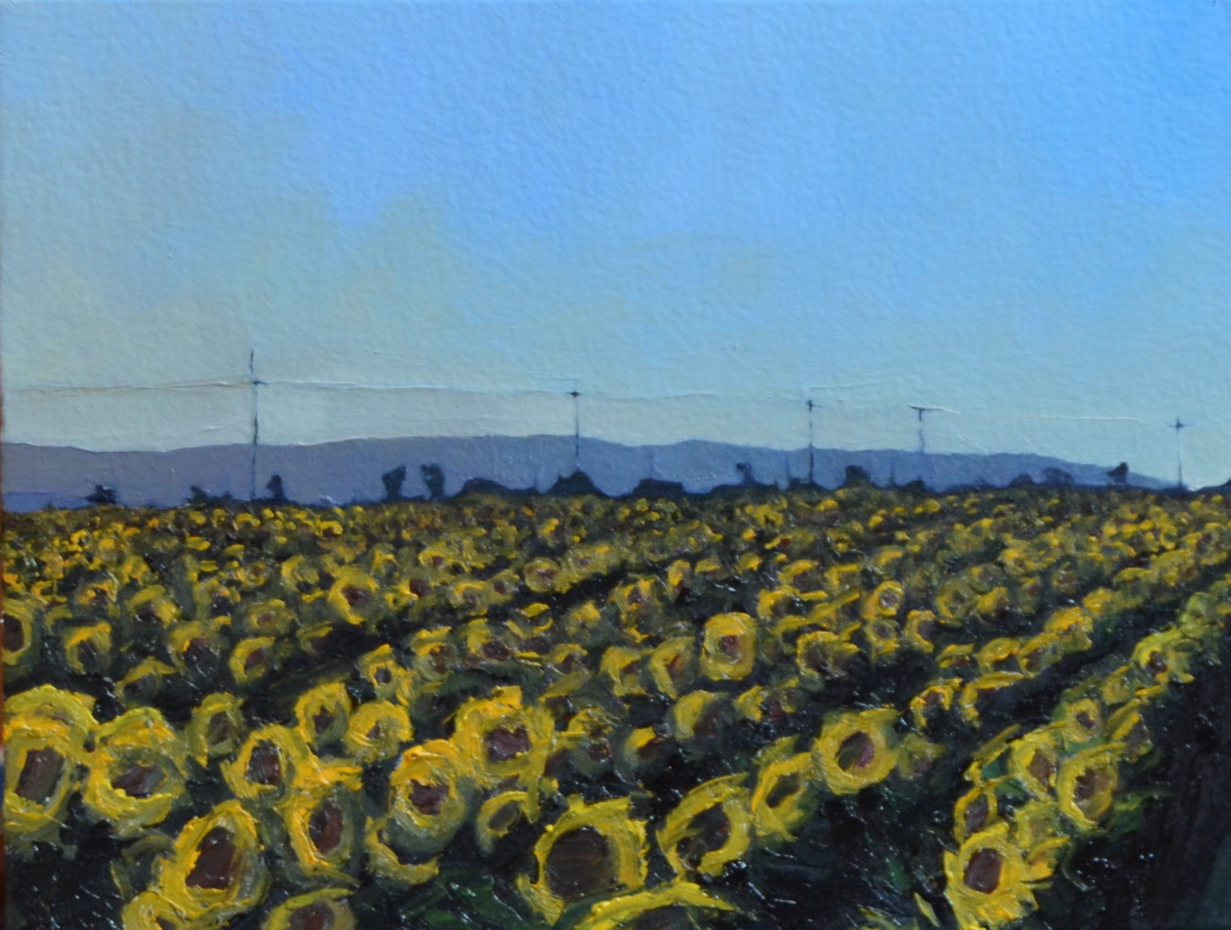 Sunflowers, Rows
