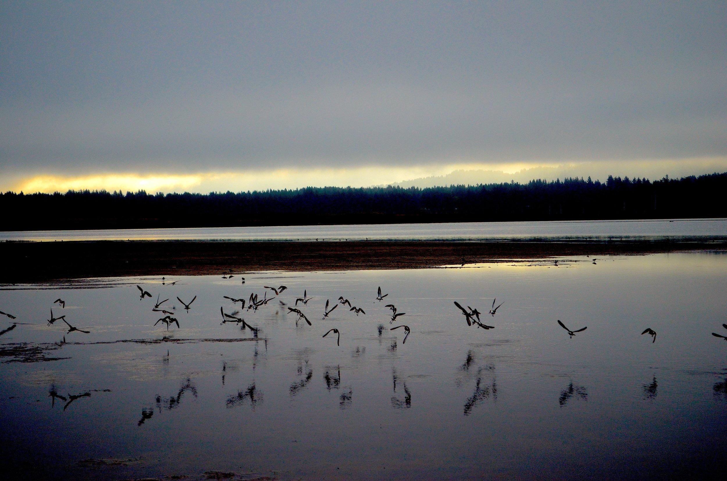 gulls_lakeearl.jpeg
