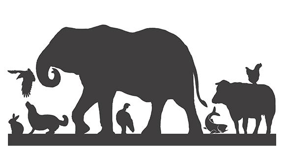 Animal_rights_academy_slider.jpg