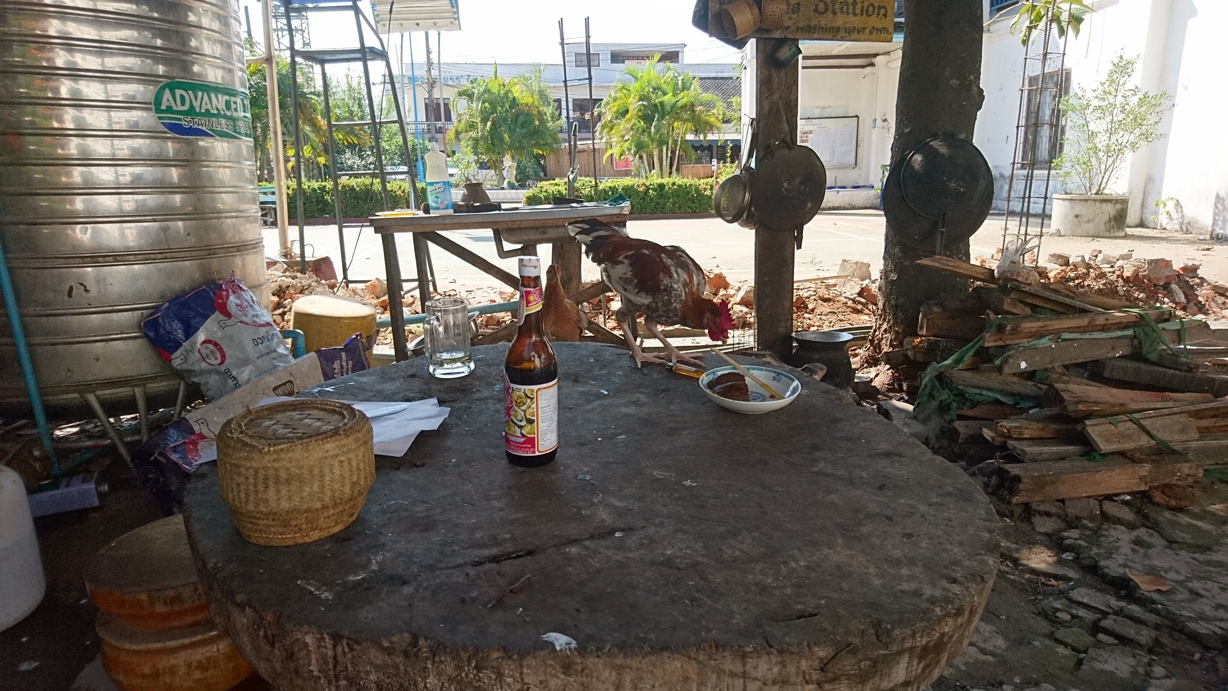 A new situation I encountered in Vang Vieng, Laos, - roosters in my dining area.