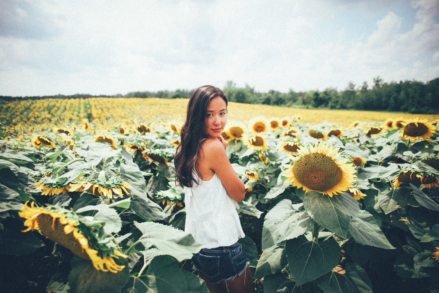 Summer 2018, not the sunflower farm that got closed down. Photo: Robbie Lòpez