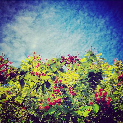 secret garden78.jpg