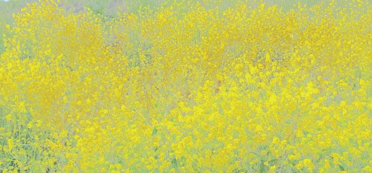 secret garden80.jpg