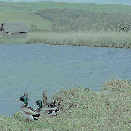Countryside Ducks.jpg