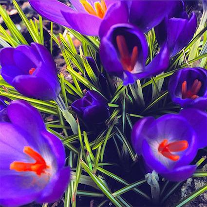 GP 12 intense purple.jpg