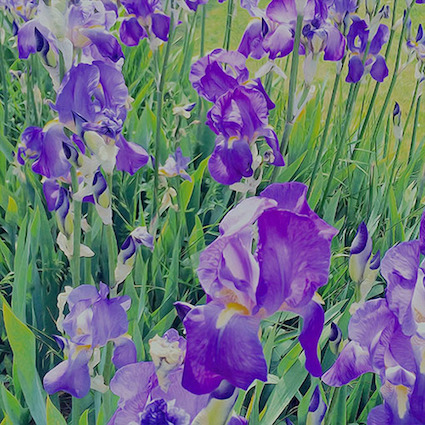 GP 10 purple art.jpg