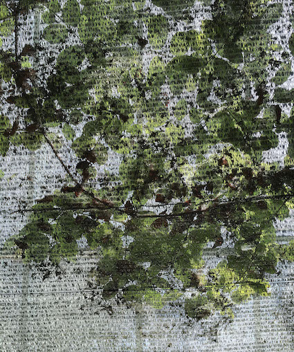 GP 21 herbarium.jpg