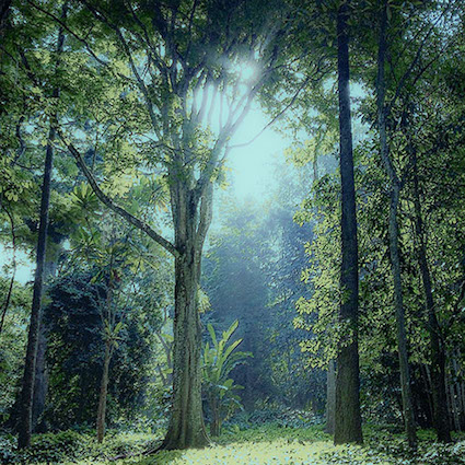 DR 8 misty forest.jpg