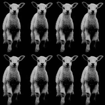 CAB9 Pop Sheep.jpg