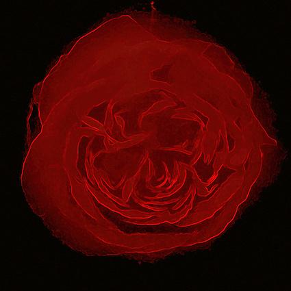 CAB18 Red Rose 2.jpg