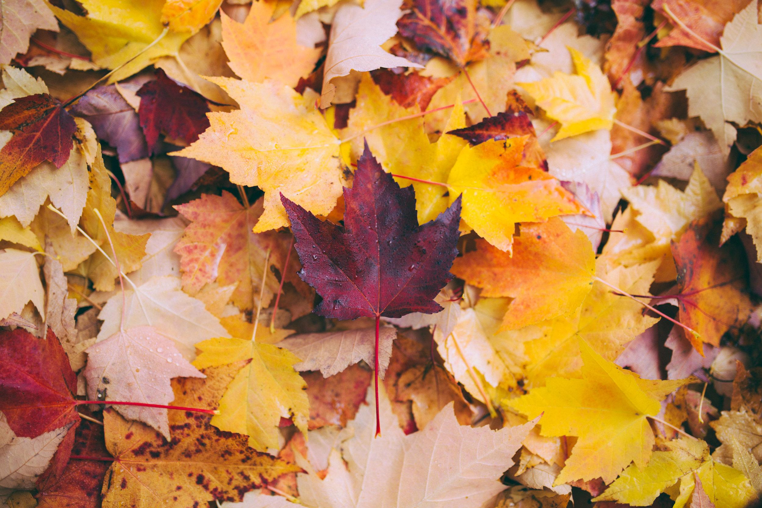 Leaves b/c leaving