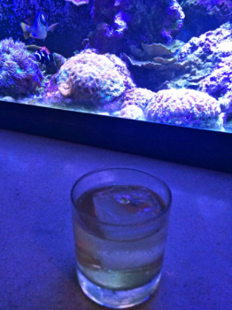 """The """"Yes Please"""" cocktail"""
