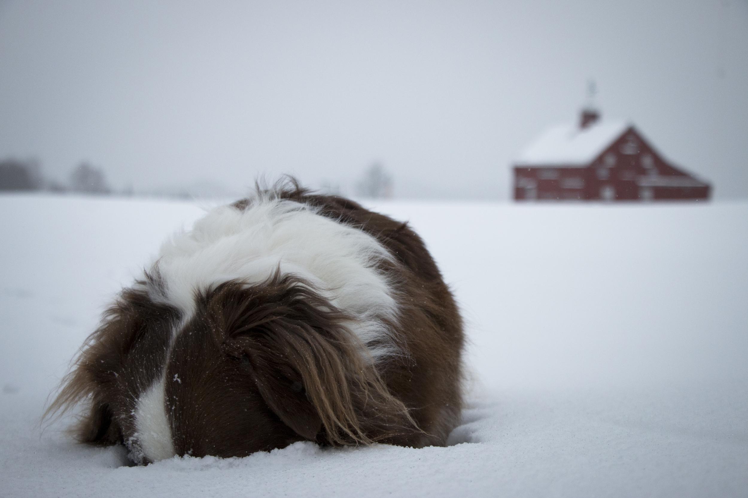 Vermont 2015-2.jpg