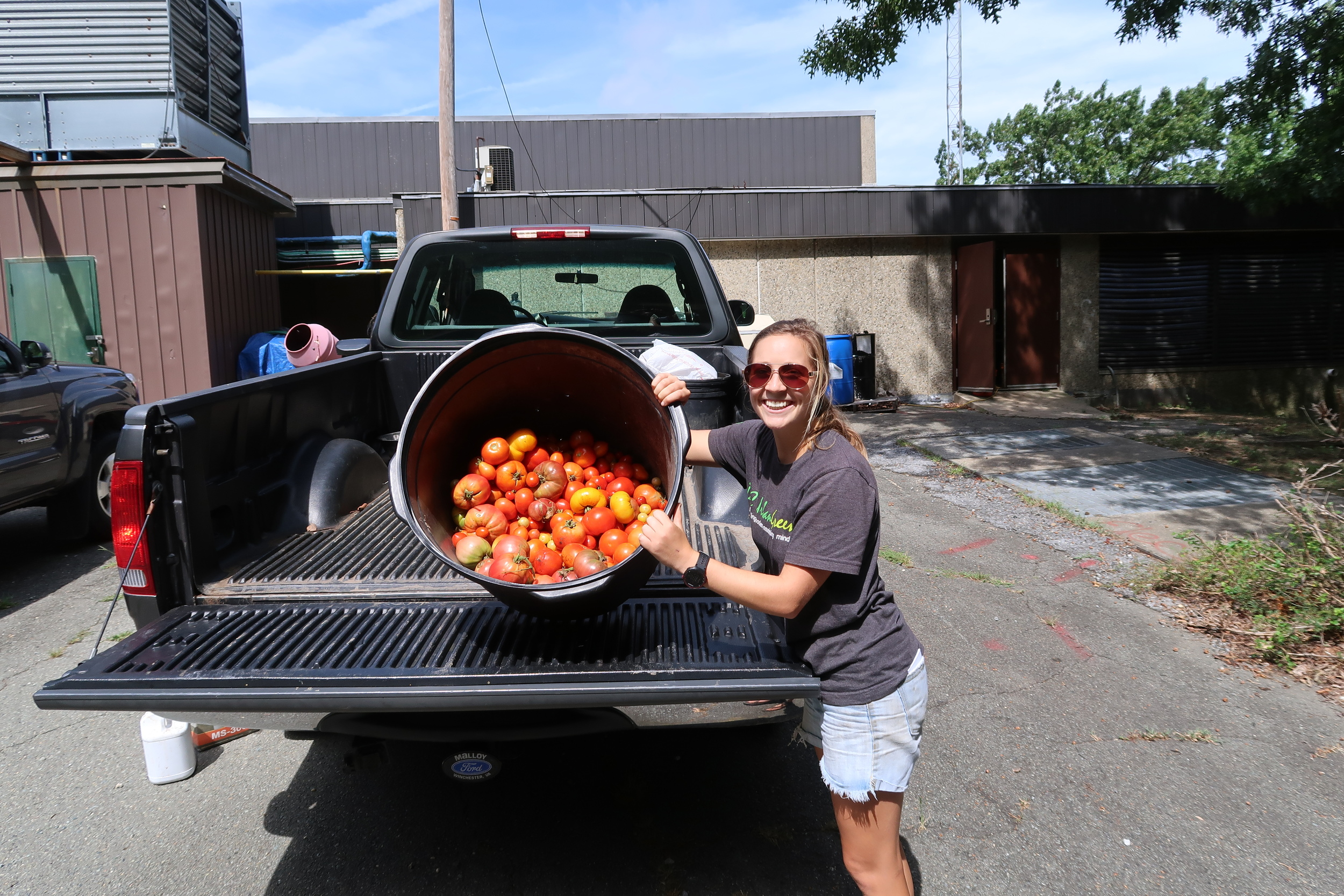 50# of tomatoes!