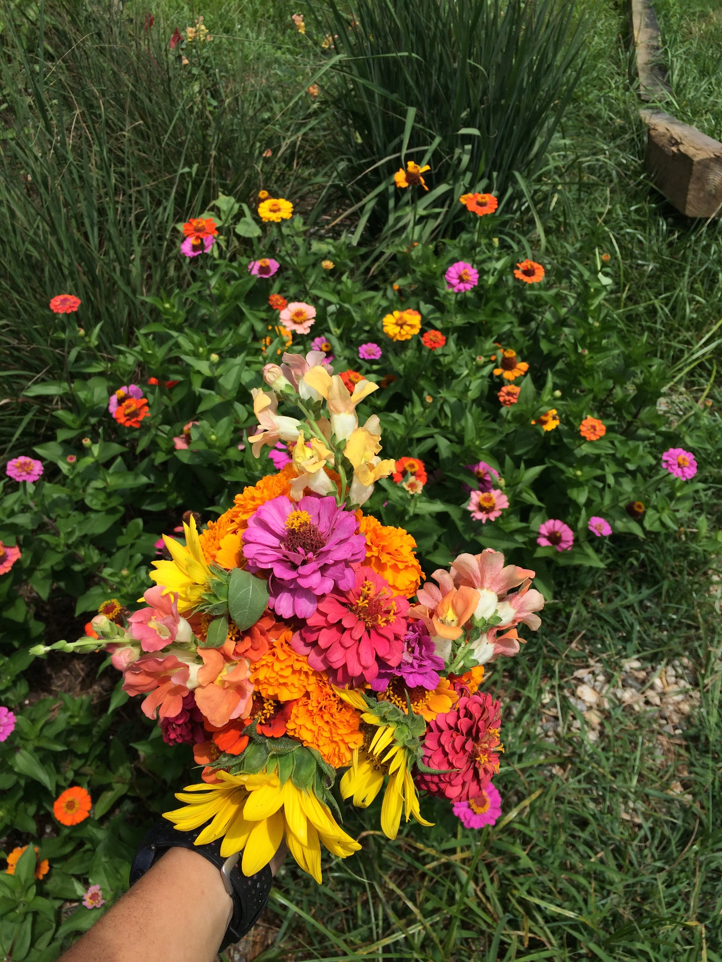 Cut-Flower Production!