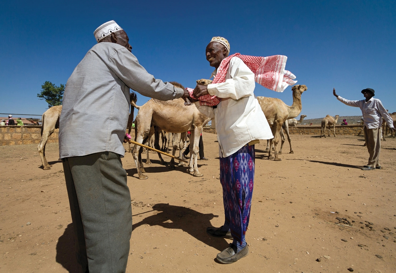 OPEN THIS PUBLICATION  RESILIENCE IN ACTION: CHANGING HORIZONS IN ETHIOPIA'S DRYLANDS