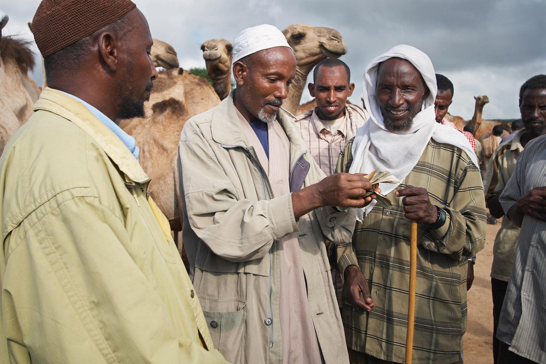 ethiopia-livestock-market-sell-camels.jpg
