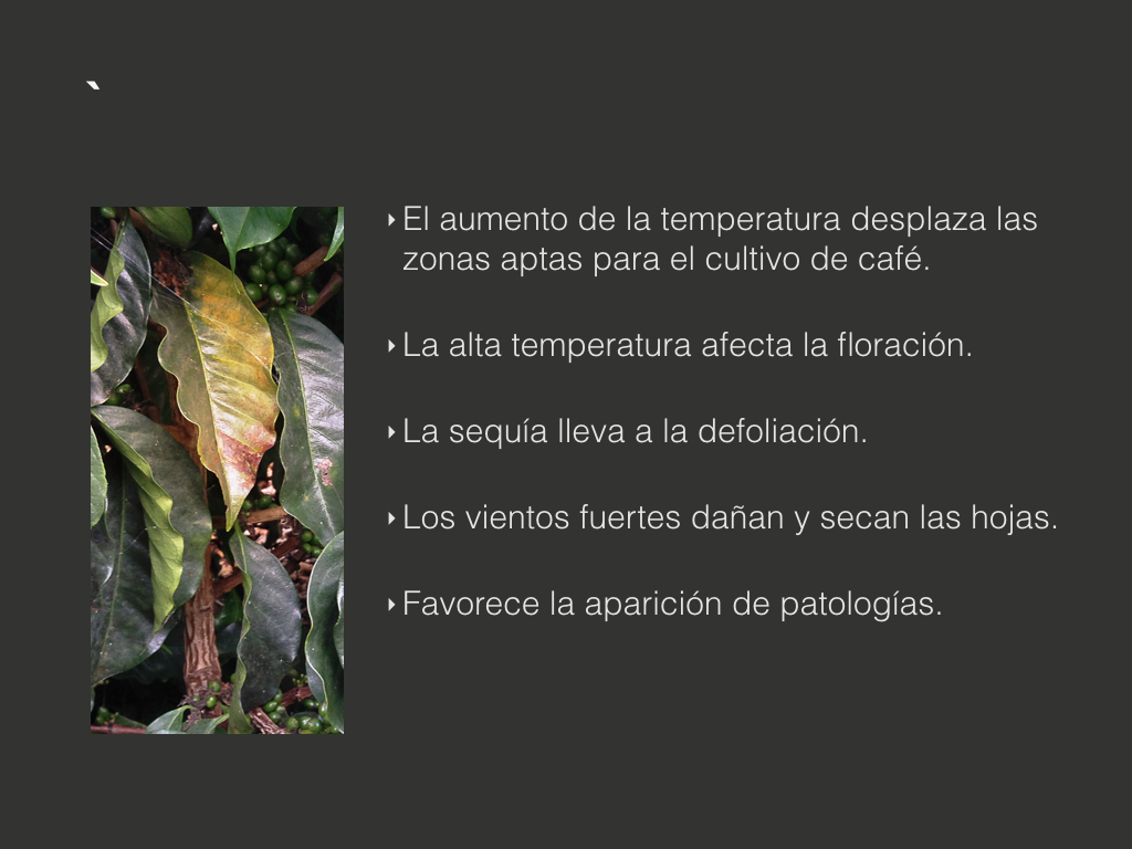 PresentacionPrivada-02-final Laura.003.jpeg